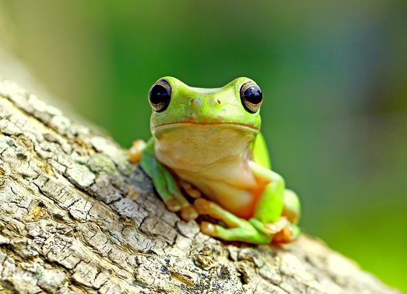 Damit Kleintiere, wie zum Beispiel Frösche, sowie Blätter und Äste nicht ins Trinkwasser gelangen können, ist eine mechanische Sperrvorrichtung notwendig. Sogenannte Froschklappen verhindern, dass die Rohre verstopft werden und dienen der Reinhaltung des Trinkwassers. Bildquelle: ASCHL (eine Marke der 1A Edelstahl GmbH)